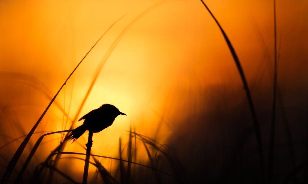 early-bird-4